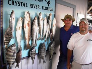 Crystal River Gators, Reds and Sheeps...
