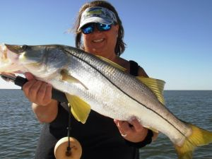 Crystal River Bonus Snook...