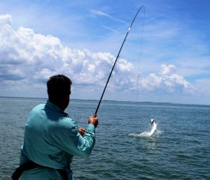 Tarpon On Fly, May 28,29,30....