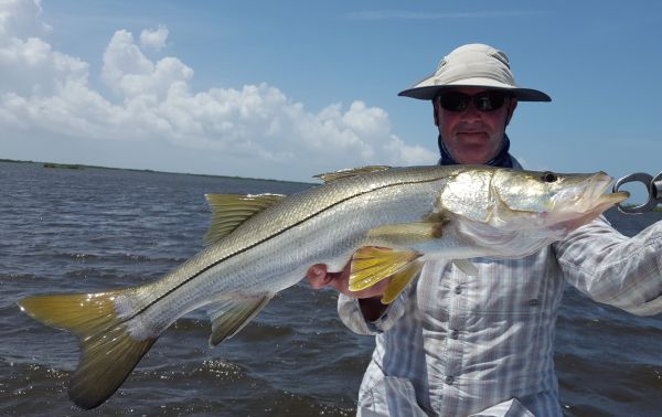 Homosassa Snook....