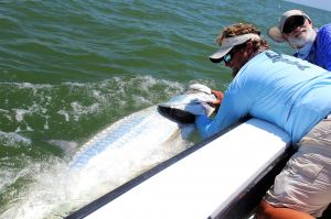 Tarpon on Fly...