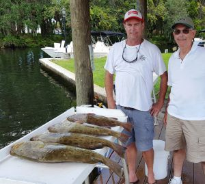 Crystal River Groupers...