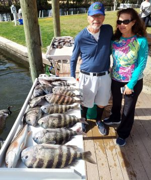 Crystal River Sheepshead....