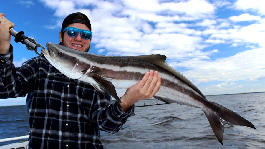 Crystal river cobia gags for Crystal river fl fishing report